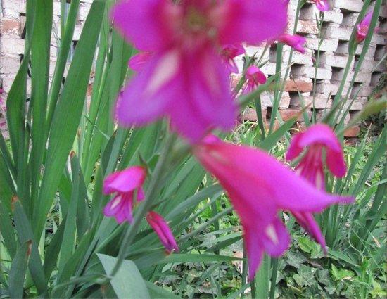 Posta Benegas: Jardin