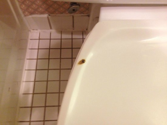 La Quinta Inn & Suites Denver Englewood Tech Ctr : Cigaret burn on toilet seat ( at first I though it was something else)