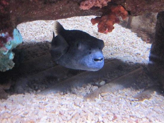 Dingle Oceanworld: tropical fish tank 2