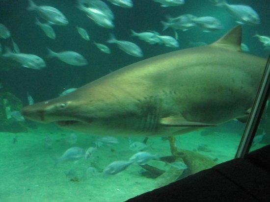 Dingle Oceanworld: shark