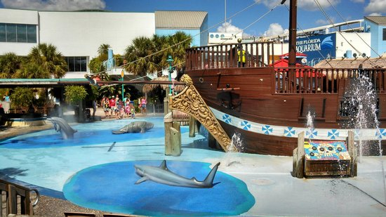 Jul 22,  · The Florida Aquarium: Small Aquarium, Large Ticket Price - See 4, traveler reviews, 2, candid photos, and great deals for Tampa, FL, at TripAdvisor.3/5.