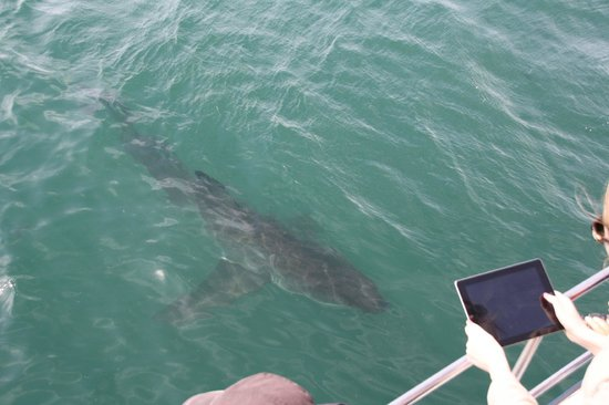 Great White Shark Tours: Just a picture from the top seating area. We have better footage but its Video