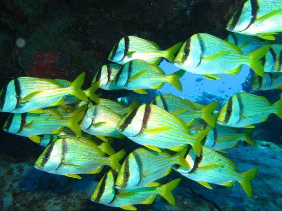Careyitos Advanced Divers: School of fish