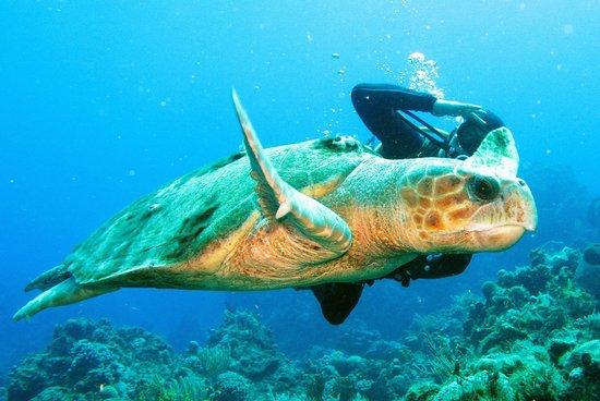 Careyitos Advanced Divers: Simone and Tortuga