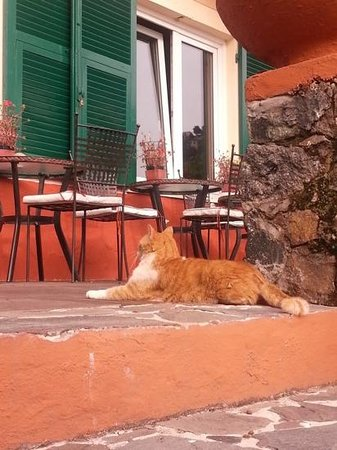 Hotel Villa Belvedere : one of the friendly hotel cats