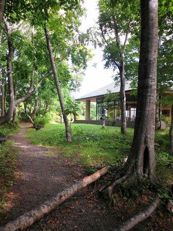 Hotel Foresta Chokai: 白樺並木の散歩道から見たレストラン