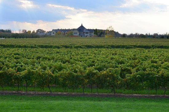 Riverbend Inn and Vineyard : Surrounded by beautiful vineyards