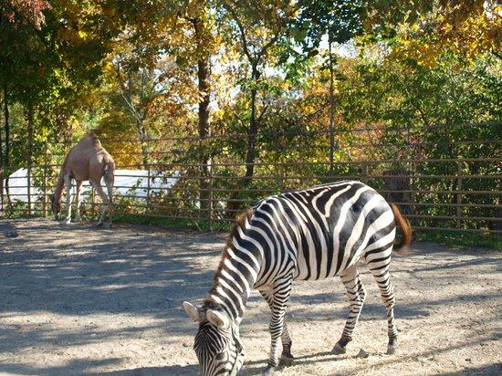 Rocking Horse Ranch Resort: Wildlife