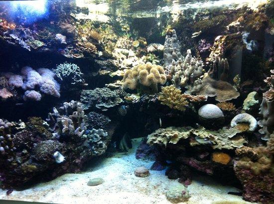 Aquarium des Lagons : Aquarium des Lagons Nouvelle Caledonie: aquarium 2