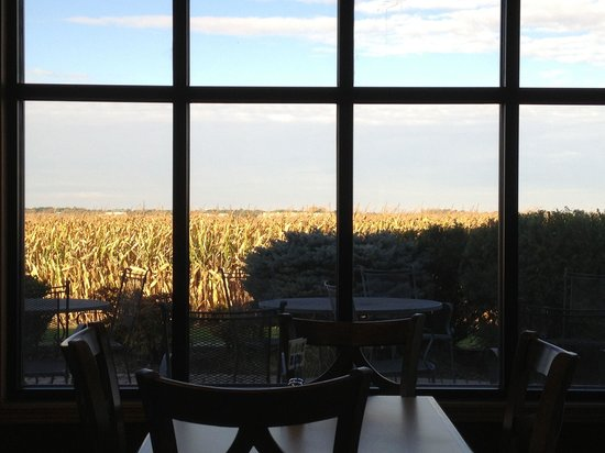 Holiday Inn Express Rochelle : Lovely breakfast spot overlooking a lush corn field.