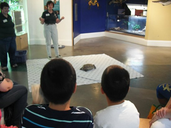 Lindsay Wildlife Museum : Tortoise