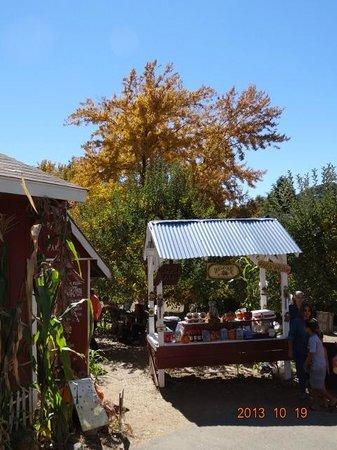 Willowbrook Farm: Entrance