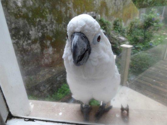 Quinta das Murtas: Parrot