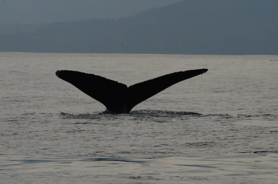 Eagle Wing Whale Watching Tours: Humpback I