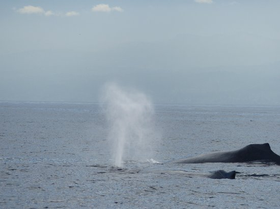 Eagle Wing Whale Watching Tours: Humpback II