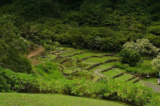 Terraced Taro Farm Picture Of Limahuli Garden And
