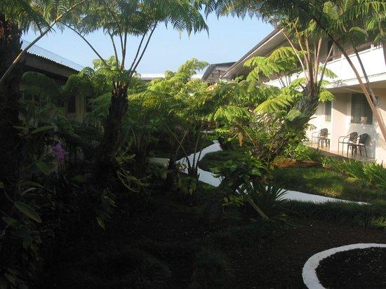 Hilo Seaside Hotel : courtyard