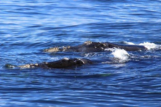 Whalesong Lodge : Wale vor De Kelders