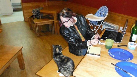 Rotorua Thermal Holiday Park: Resident Kitty came to say hello