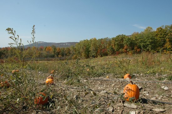 Jenkins Lueken Orchards: Our Pumpkin Patch at Pick-Your-Own