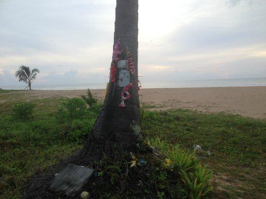Khaolak Orchid Beach Resort: Palm Tree
