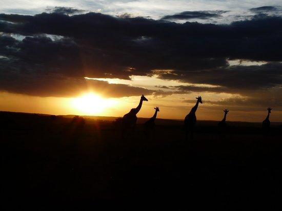 Entim Camp: Sonnenuntergang