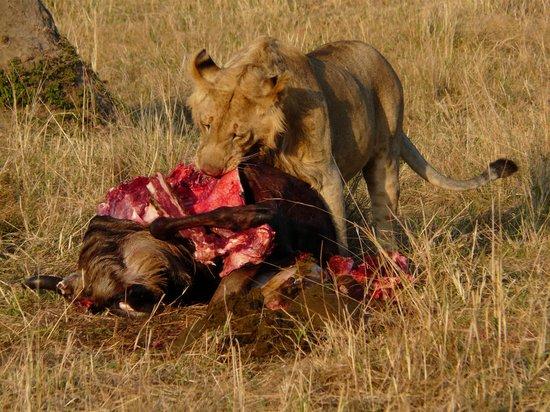 Entim Camp: Löwe am Riss
