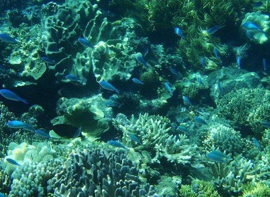 Sunlover Reef Cruises: 潜ると会える