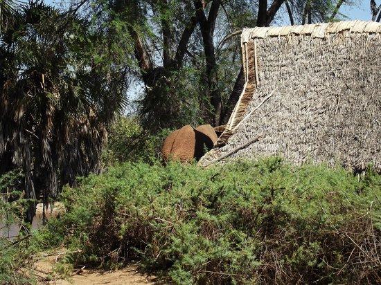 Galdessa Camp: elefante