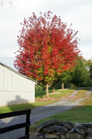 Alpine Hideaway: View from Pond View Cabin-Fall Foliage
