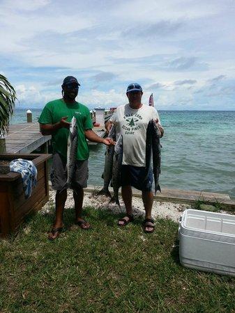 Hatchet Caye Resort: More barracudas