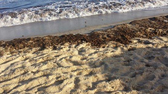 L'Ecrin Sandra Club: Sea water was black with waste