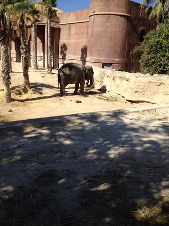 Terra Natura : elephants