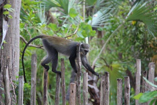 Ras Kutani: Garden