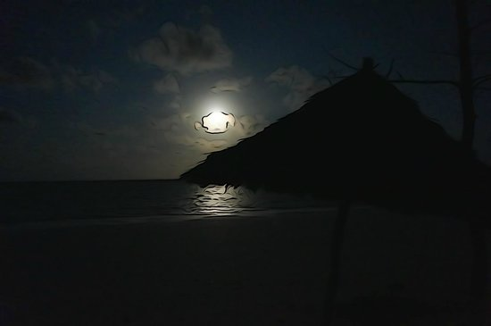 Savanna and Ocean : Full moon