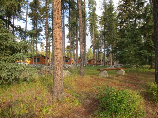Becker's Roaring River Chalets: View of the cabins