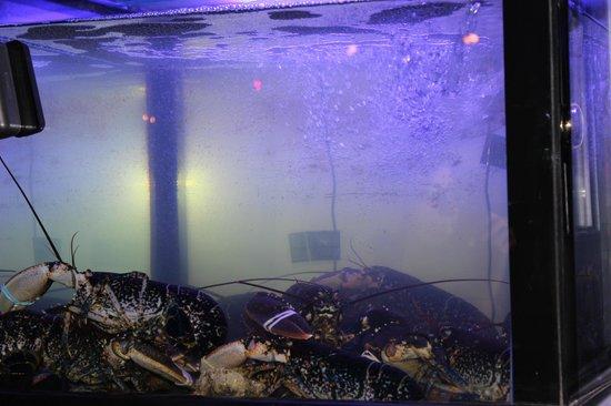 O'Resto: Le vivier à homards