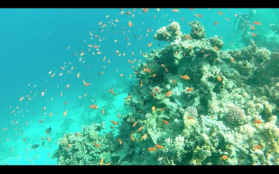 Red Sea Diving College : Lots of Fish