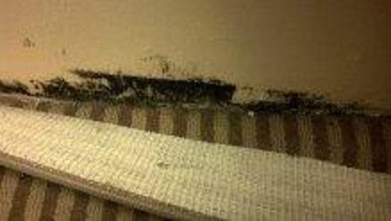 Sheraton Great Valley Hotel: Mold behind carpet runner