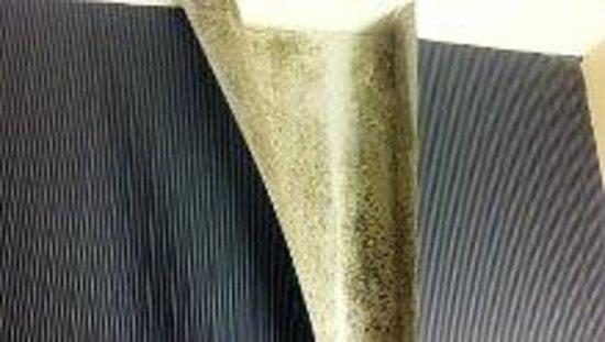 Sheraton Great Valley Hotel: Peeling wallpaper/mold