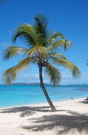 Palm Island Resort & Spa: Palm tree on the beach