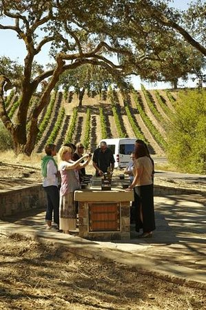 Jordan Vineyard & Winery: Estate Grown Olive Oil tasting in the grove on the tour
