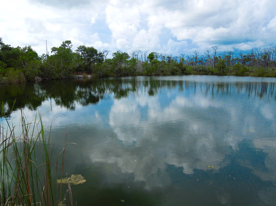 Blue Hole: here it is... small hiking trails around it and the area Hammock