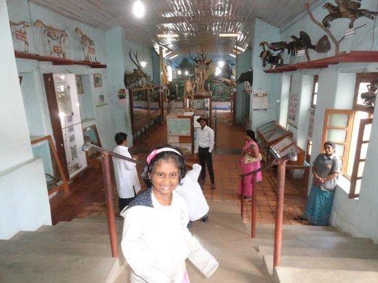 Shembaganur Museum of Natural History: Shenbaganur Meuseum