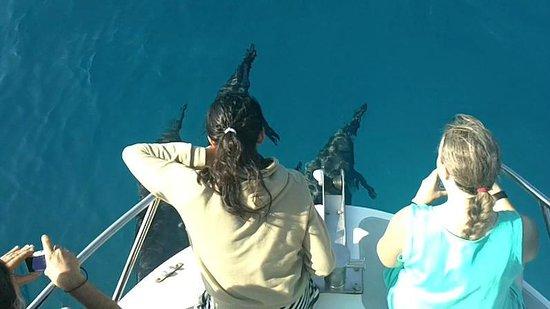 Coral Reef Snorkel Adventures : Dolphin