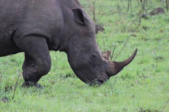 Heritage Tours & Safaris: White Rhino