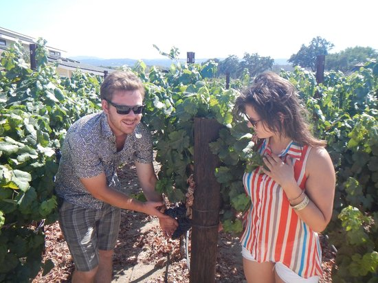 Wine Wrangler - Day Tours: gettign up close and personal with some grapes!