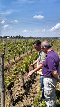 Loire Valley Uncorked: In the vines with Gérald