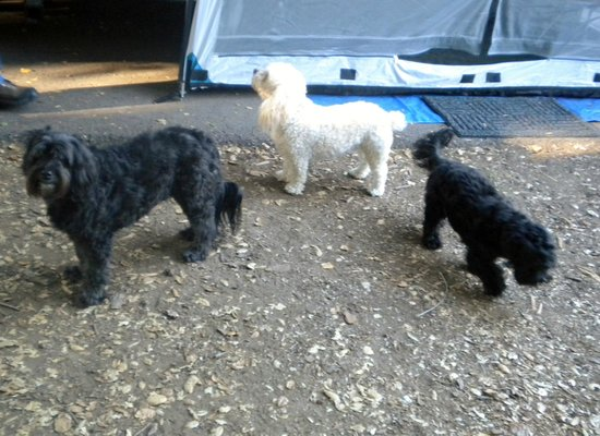 Dos Picos County Park Campground: Our three little dogs