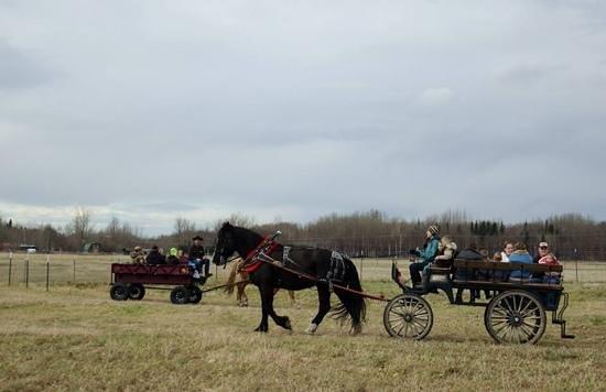 Reindeer Farm: wagon ride